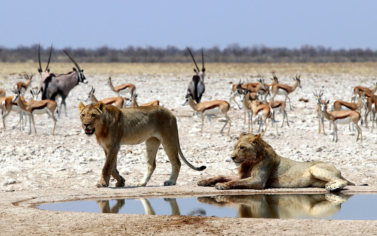 Hire 4X4 Africa, Africa 4X4 rental, 4X4 Safari, Self drive safari, Equipped 4X4 rental, Namibia 4X4 hire, Botswana 4x4 hire, Self drive Namibia, Self drive Botswana, 4x4 rental, 4x4 hire, 4x4 rental Upington, 4x4 bakkie rental Upington, 4x4 bakkie hire Upington, 4x4 bakkie rental, Selfdrive rental, Selfdrive hire, Selfdrive 4x4 rental, Selfdrive 4x4 hire, Selfdrive 4x4, Safari rental, Safari rental Upington, Safari 4x4 rental, Safari 4x4 hire, Safari 4x4 hire Upington